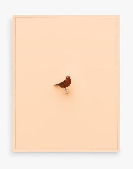 Daniel Handal, 'Senegal Fire Finch (Peach Puff)', 2017