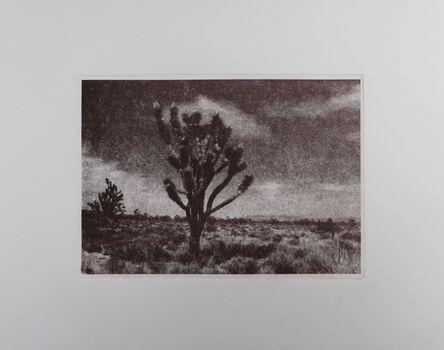 Nicole Geary, 'In The Joshua Trees', 2017