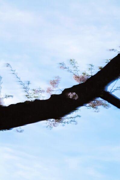 Yoshinori Mizutani, 'Sakura 007', 2015