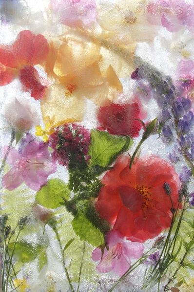 Mary Kocol, 'The Garden On June 3 2011', 2011