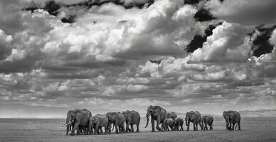David Yarrow, 'The Waterboys', 2015
