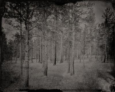 Eric Overton, 'Kaibab Forest', 2015