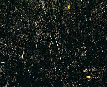 Ignacio Iasparra, 'Untitled', 2008