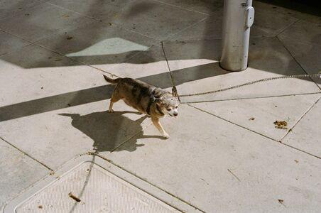 Lala Serrano, 'THE MAN WITH A DOG', 2017