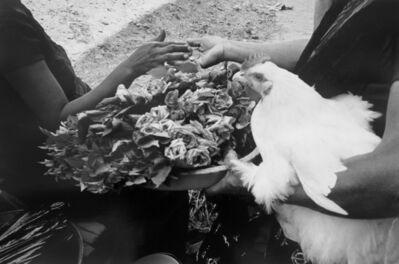 Graciela Iturbide, 'Gallina, Flores y Moneda', 1984