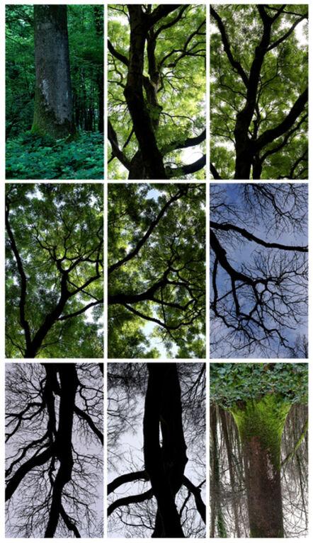 Jeffrey Blondes, 'Le Bois de Mametz', 2017