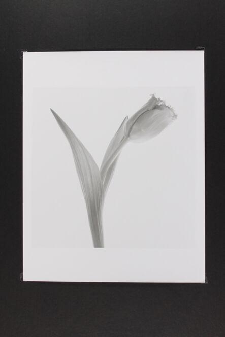 Phil-Hee Kong, 'Tulip', 2014