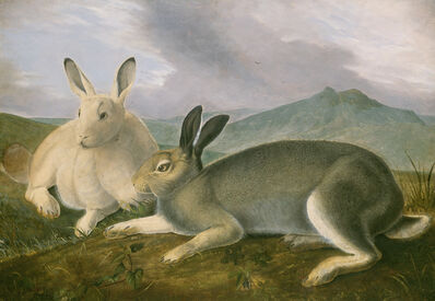 John James Audubon, 'Arctic Hare', ca. 1841