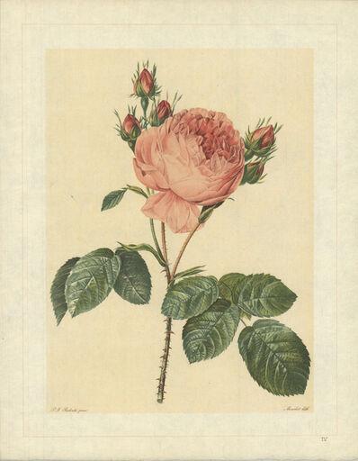 Pierre Joseph Redouté, 'Rosa Centifolia; Rosier de Provence', 1938