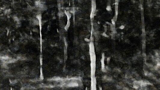 Avinash Veeraraghavan, 'Breathing Charcoal Soaked in a Shallow Forest Sream', 2010
