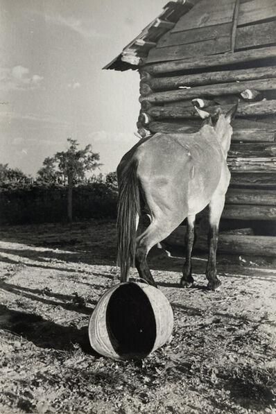 Walker Evans, 'Untitled (Mule and Overturned Bucket)', 1937