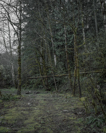 Chris Bennett, 'From the series Darkwood, #8', 2014