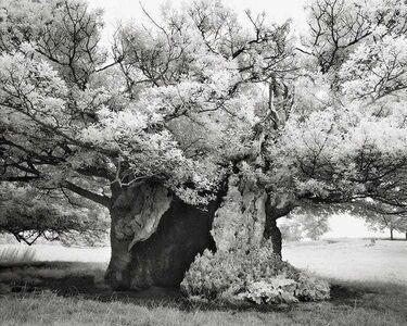 Beth Moon, 'Queen Elizabeth's Oak', 2004