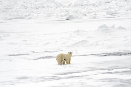Ellen Jacob, 'Polar Bears', 2018
