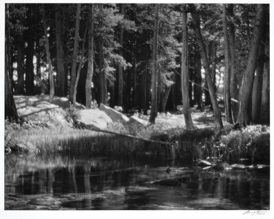 Ansel Adams, 'Lodgepole Pines, Lyell Fork of the Merced River, Yosemite National Park, California', 1921