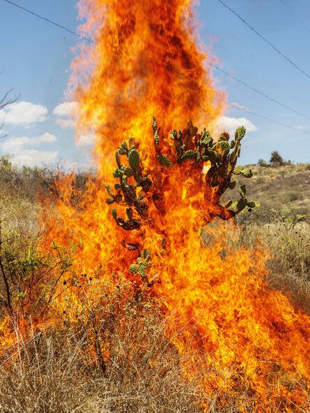 Pieter Hugo, 'Burning Bush, Oaxaca de Juárez', 2018
