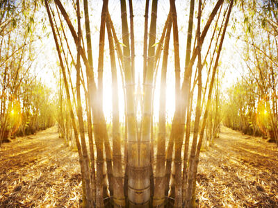 Laurie Victor Kay, 'Bamboo', 2011