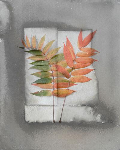 Alida Fish, 'Fall Sumac'