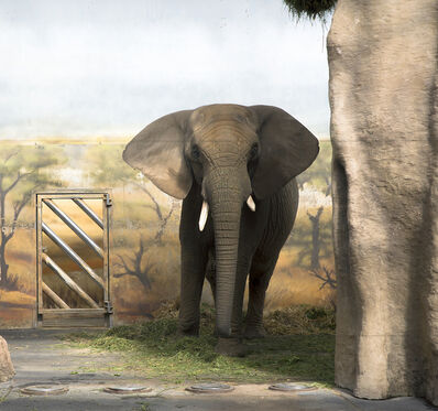Eric Pillot, 'Elephant and Forage', 2013