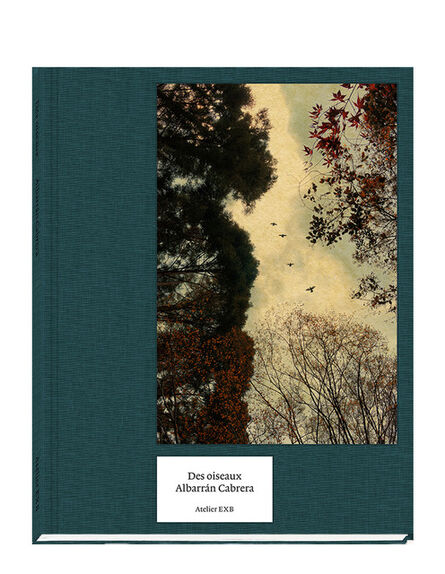 Albarrán Cabrera, 'Des oiseaux', 2020