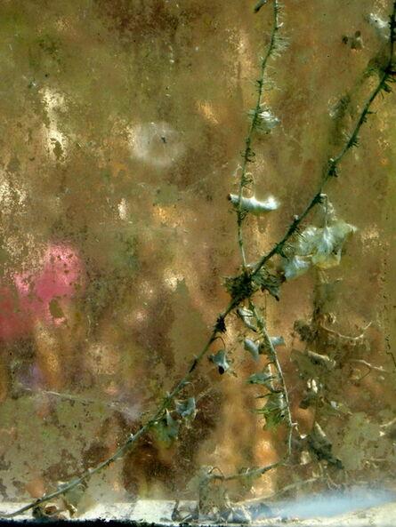 Anne Pharel, 'Jardin Intérieur n°25'