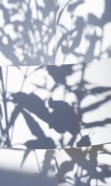 Brenda Biondo, 'Shadow Legacy no. 8', 2020