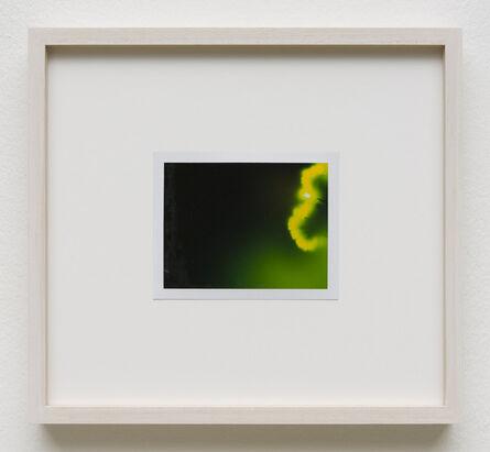 Peter Miller, 'Photuris #4', 2013