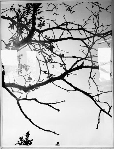 Meghan Gerety, 'Untitled', 2003