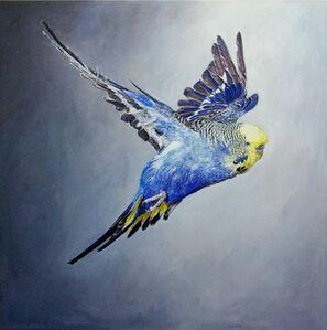 Ulrich Lamsfuss, 'Frank Greenaway, Blue Budgerigar with yellow head in flight, side view (gty im. 73507000), No 1', 2012