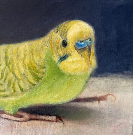 Deborah Davidson, 'Yellow Parakeet Portrait', 2020