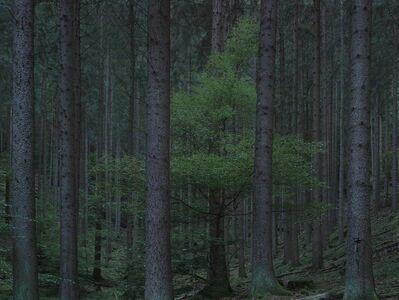 Michael Lange, 'WALD | Landscapes of Memory#5704', 2011