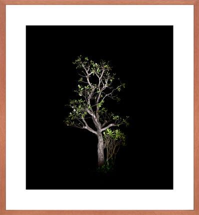 Ralf Peters, 'Baum #6', 2012