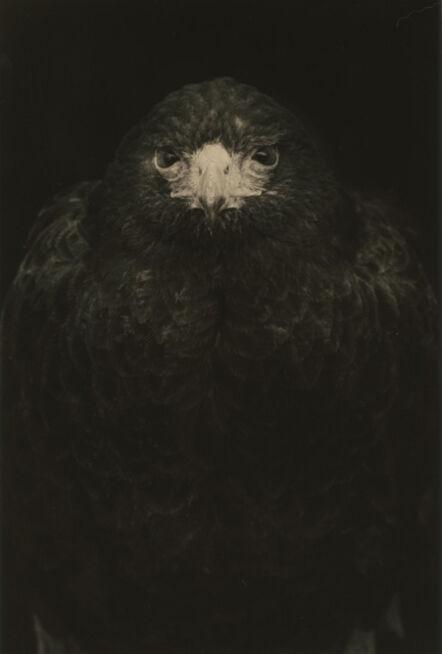 Yamamoto Masao, '#1649'