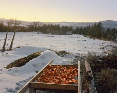 Trent Davis Bailey, 'Carrots, Hotchkiss, Colorado', 2015