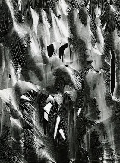 Brett Weston, 'Plastic', 1955