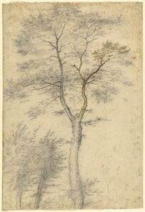 Baccio della Porta, called Fra Bartolommeo, 'Three Studies of Trees', 1508
