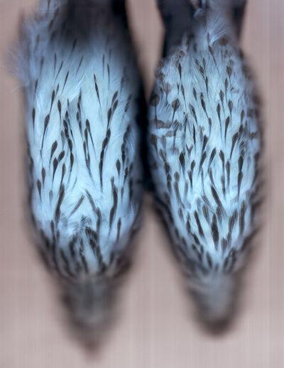 Ann Hamilton, 'Cooper's Hawk', 2004