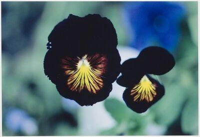 Ernst Haas, 'Violas, Colorado', 1983