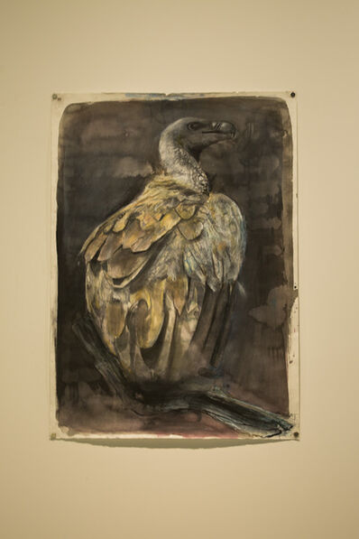 Russ Ronat, 'African White Backed Vulture #1', 2018