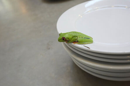 Juergen Teller, 'Frogs and Plates No.3', 2016