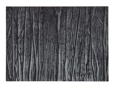 Christiane Baumgartner, 'Im Walde', 2007