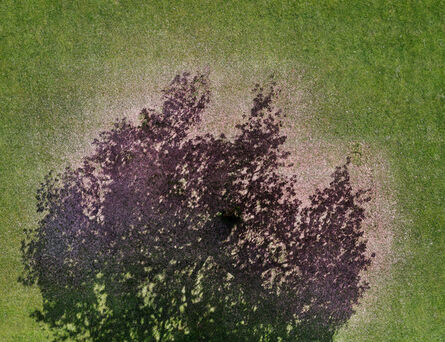 Andreas Gefeller, 'Cherry Blossoms', 2010
