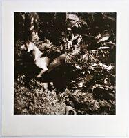 William Wegman, 'Bird Dog Suite (One Plate)', 1990