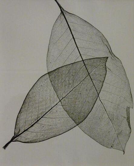 Herbert Matter, 'Two Transparent Leaves', 1945