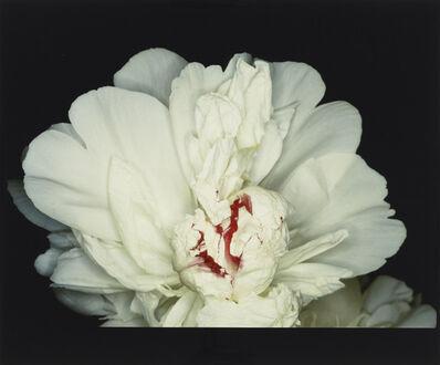 Nobuyoshi Araki, 'Feast of Angels : Sex Scenes', 1992