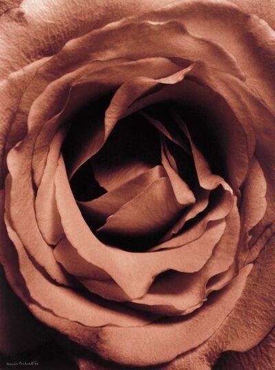 Denis Brihat, 'Coeur de Rose', 1994-printed 1995