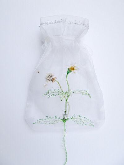 Rosana Palazyan, 'Tridax procumbens homo Da série Coleção de sementes Daninhas', 2014