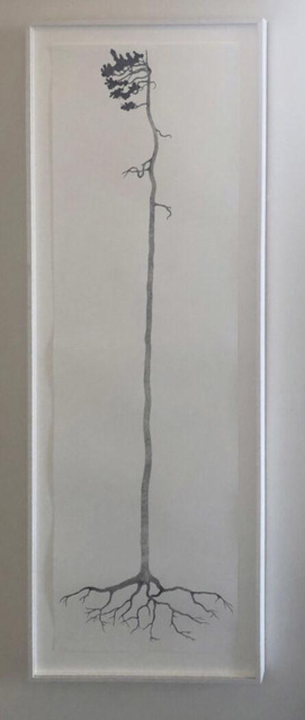 Reinhard Reitzenstein, 'Jeffrey Pine (pinus jeffrey) ', 2014