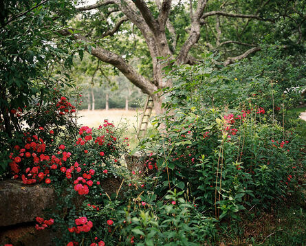 Palmer Davis, 'Wild Roses', 2014