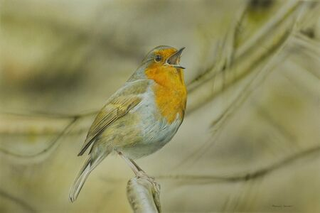 Adrian Smart, 'Singing Robin'